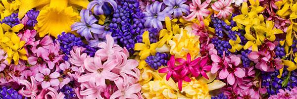 flowers-zhg