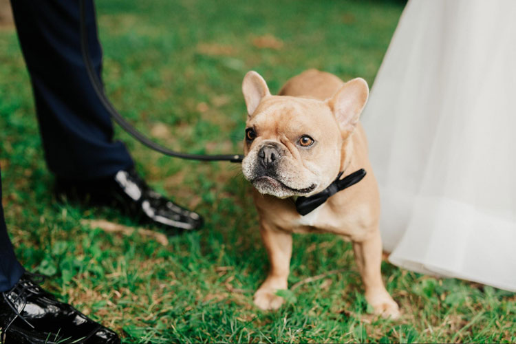 Bring Pet to Your Wedding